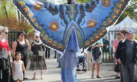 Compagnie Acta Fabula - Papillon & Libellule, sentinelles de la Biodiversité