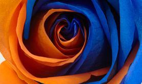 Compagnie Blue orange