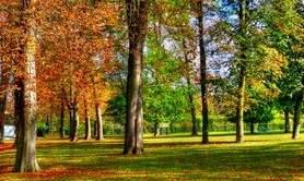 Aquarelle sur le motif : Les couleurs d'automne