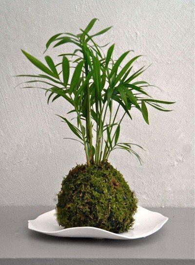 Atelier de kokedama sph re de mousse et v g taux paris for Plante kokedama