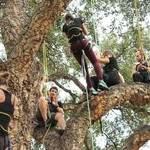ACTIVITE : Grimpez dans les arbres